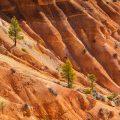 Bryce Canyon / Utah