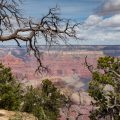 Grand Canyon on the rim