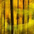 Herbst im Waldrevier